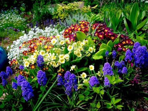 garden-plants-flowering-3