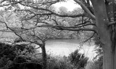 cropped-jcangelcraft-paris-images-environment-trees-lakes-misty-img-53102.jpg