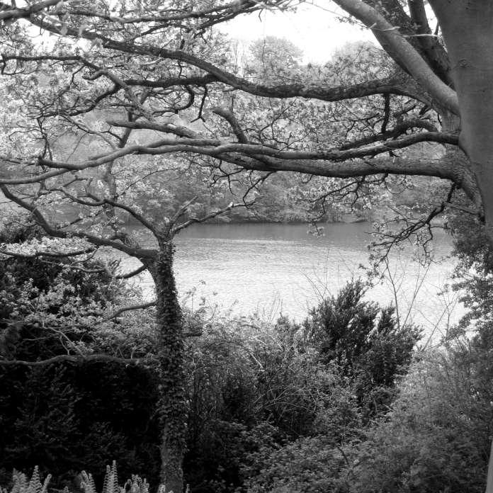 JCANGELCRAFT PARIS IMAGES ENVIRONMENT TREES & LAKES MISTY IMG 53102